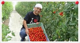 中玉トマト生産者 戸塚 夏樹さん