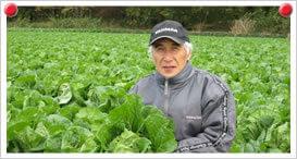 白菜生産者 吉田 義博さん