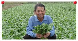 小松菜生産者 吉岡 利明さん