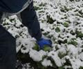 11月の積雪は66年ぶり!!